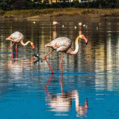 Flamingos in the salt lake